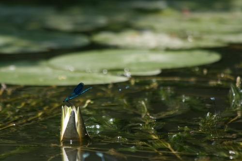 Tisza-tó vízitúra kép3943